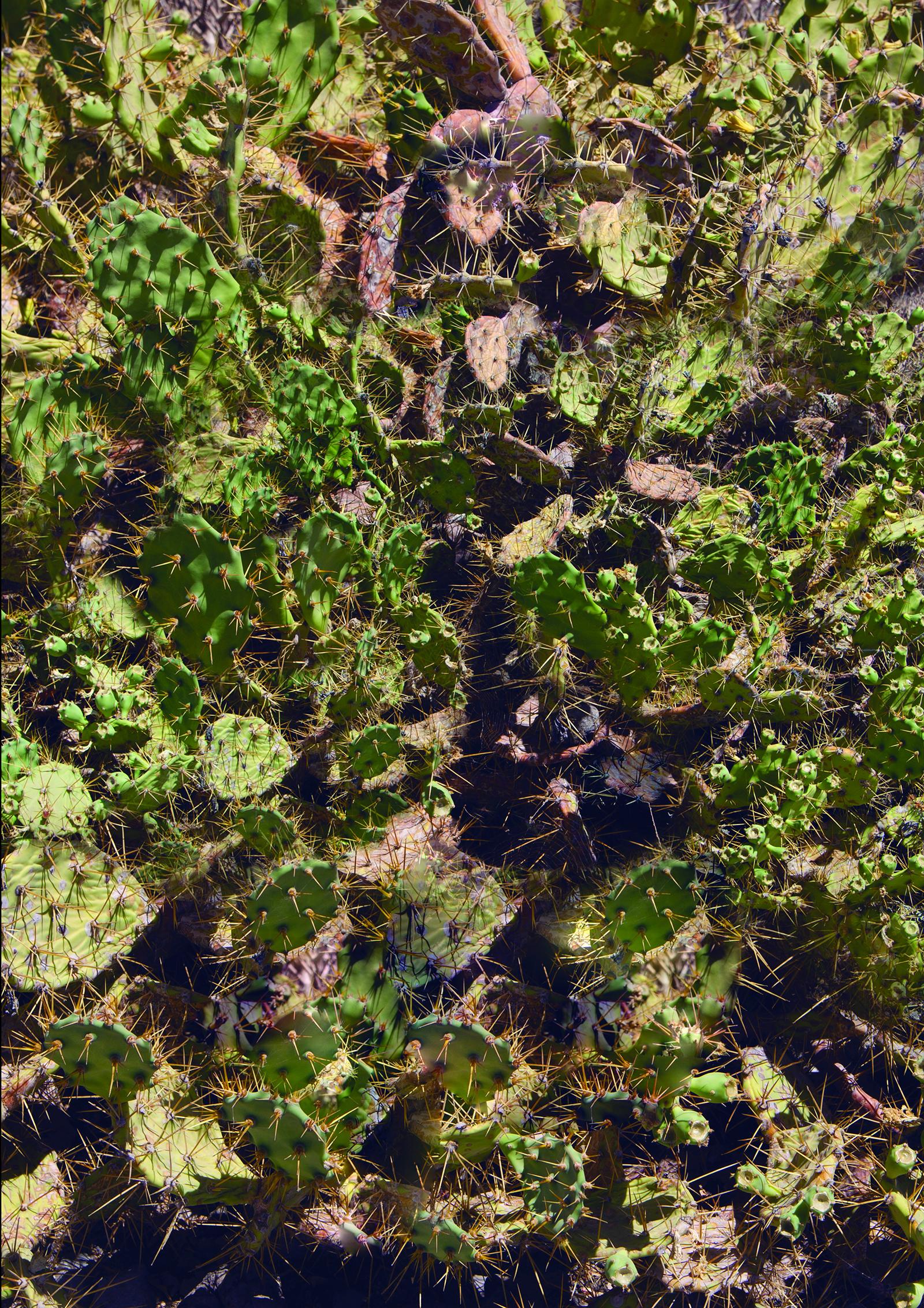 Yosley / Cactus Lava Wave — Digital print, 2015.