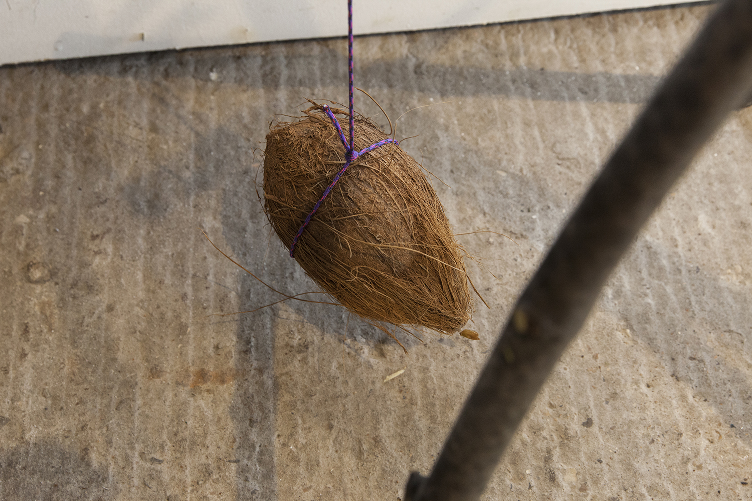 Splice / Dead (detail) — Wooden poles, rope, coconut and fig branch, 2019.