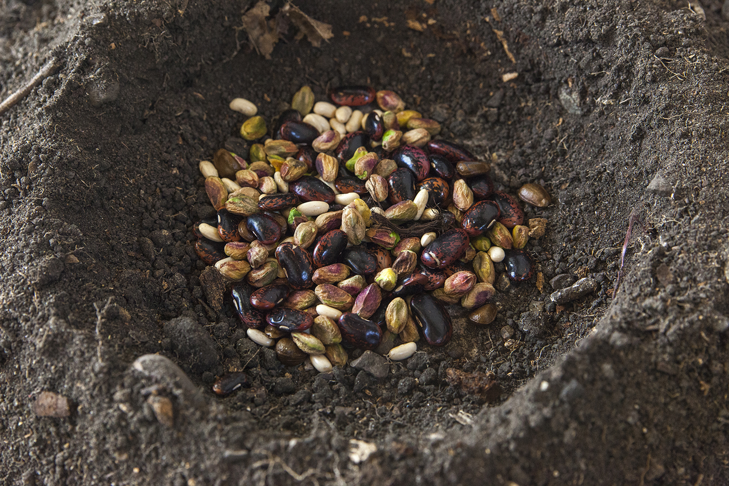 He(i)nge (detail) — Soil, nuts, beans and seeds, 2019.